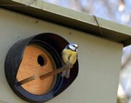 Speed camera birdhouse