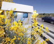Spanish speed camera flowers